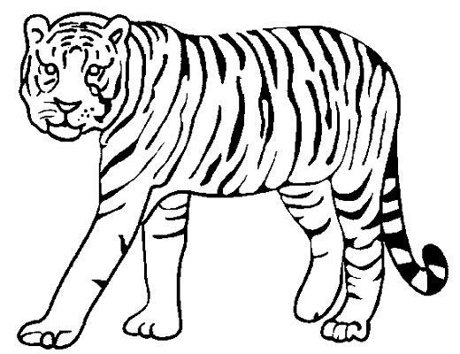 行走的老虎简笔画