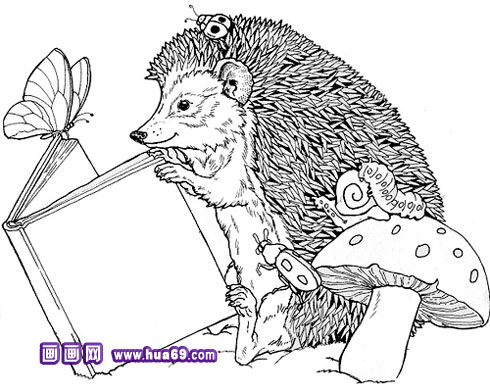 小刺猬看书简笔画,画画网