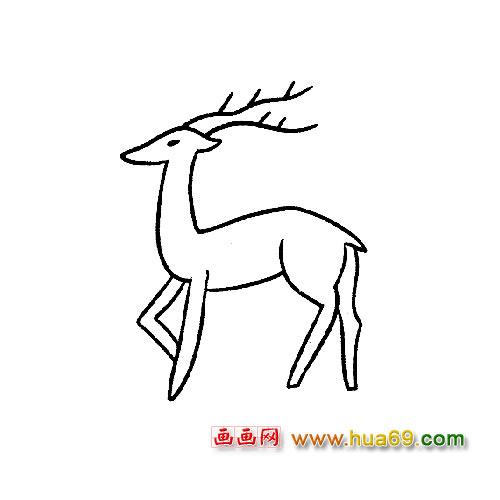 动物简笔画:长角的梅花鹿