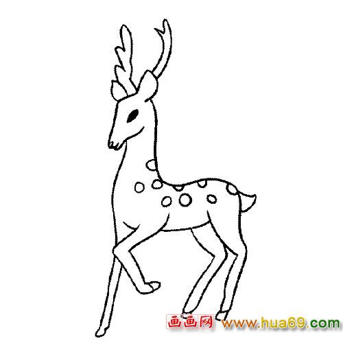 动物简笔画 抬脚的梅花鹿