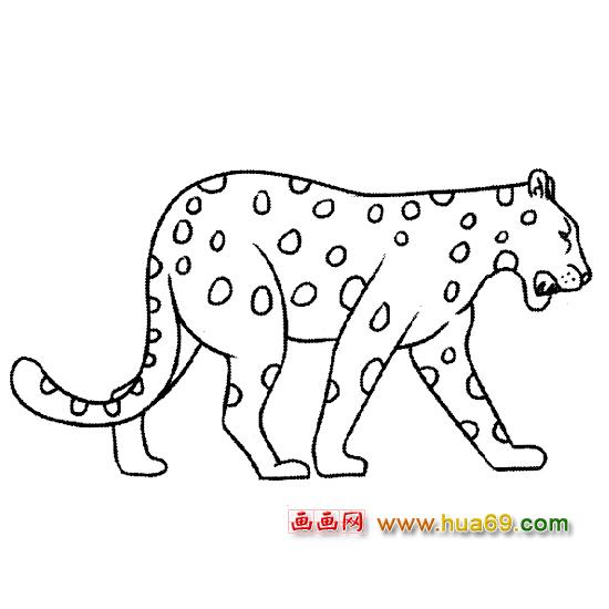 凶猛的豹子简笔画