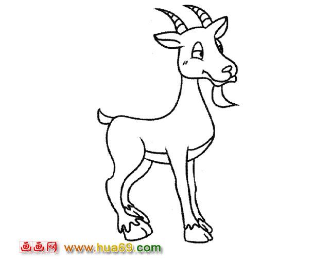 山羊简笔画图片大全老山羊简笔画 顶角的山羊简笔画