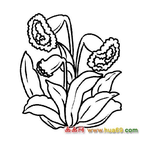 低头的牵牛花│花卉简笔画