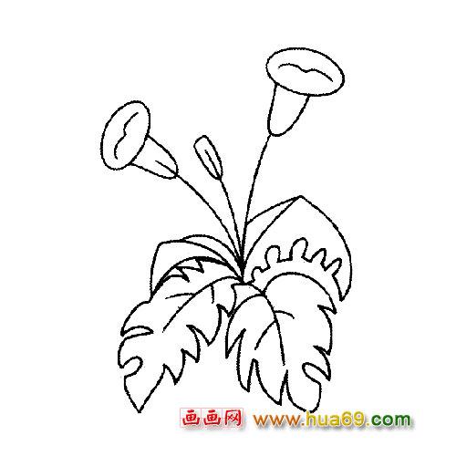 含苞待放的牵牛花│花卉简笔画