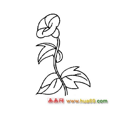 花卉简笔画 一朵牵牛花简笔画1