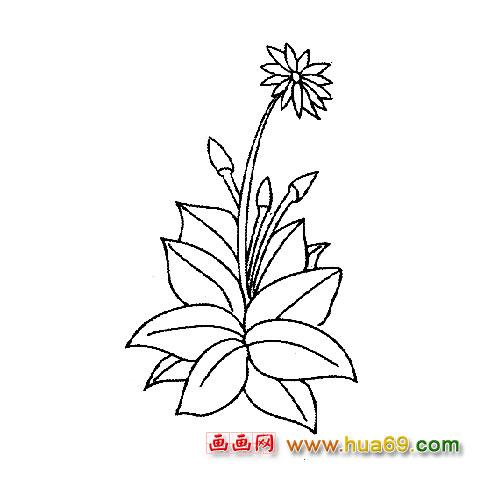 美丽的菊花│花卉简笔画