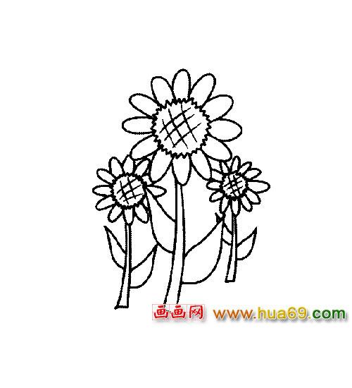 花卉简笔画 一朵向日葵4