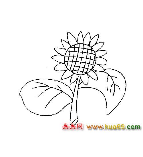 向日葵简笔画带颜色
