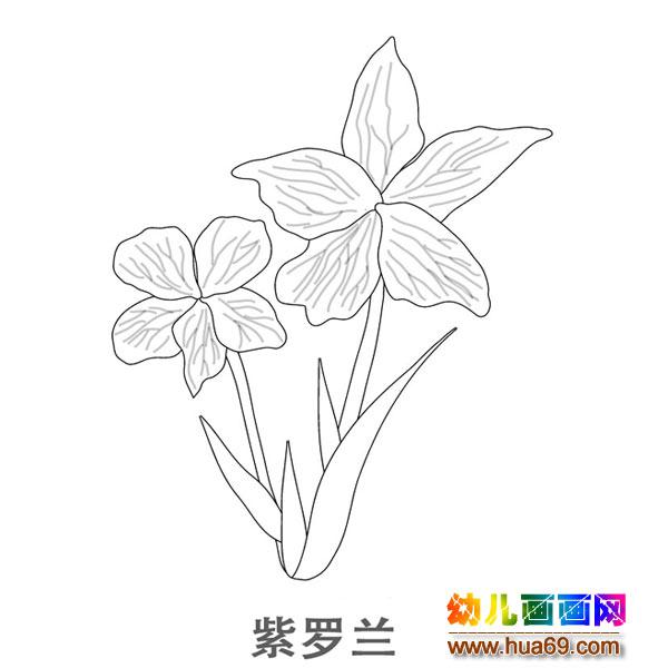 儿童简笔画图片:一株美丽的紫罗兰