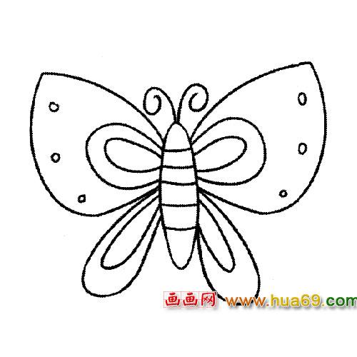 简笔画:有斑点的蝴蝶5