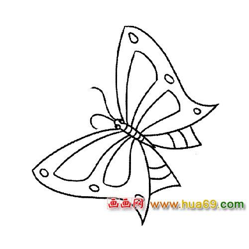 简笔画│飞舞的蝴蝶4