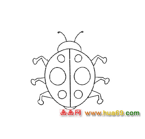 益虫简笔画│七星瓢虫5
