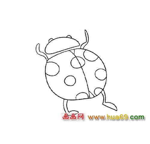 益虫简笔画│七星瓢虫3