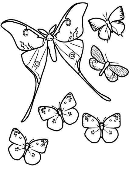 漂亮的长尾蝴蝶 儿童简笔画图片