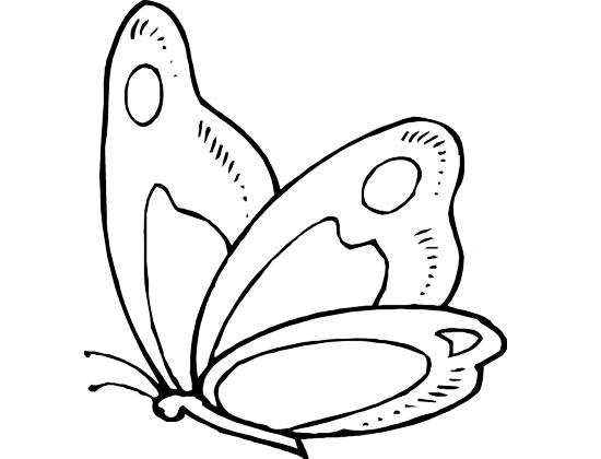 飞翔的蝴蝶_儿童简笔画图片1