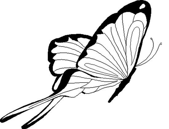 飞翔的蝴蝶 儿童简笔画图片3