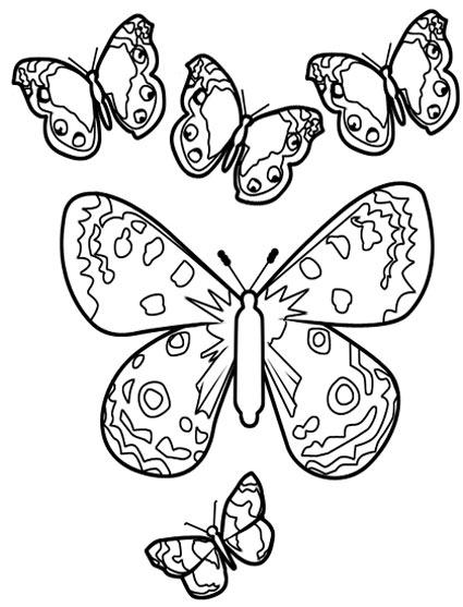 漂亮的蝴蝶 怎样画昆虫简笔画2