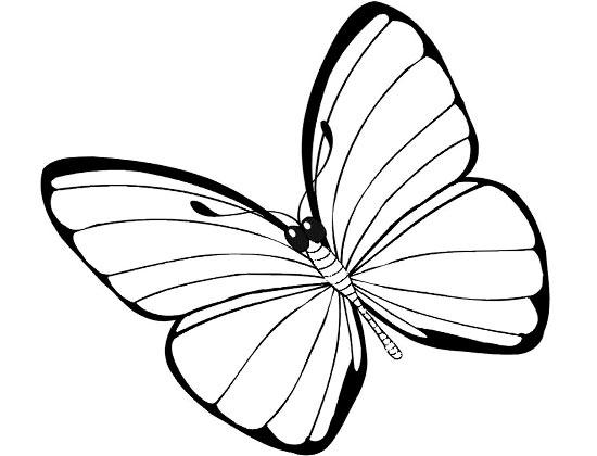 一只小蝴蝶 怎样画昆虫简笔画,画画网