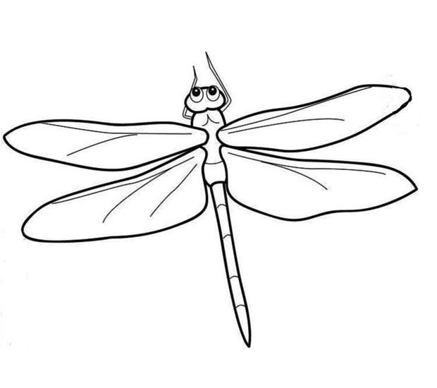 幼儿简笔画:蜻蜓的画法图解