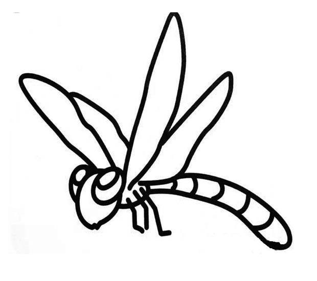 幼儿简笔画:蜻蜓的画法图解2