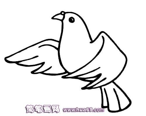 鸟类简笔画:飞翔的鸽子—幼儿; 简笔画 和平鸽;; 鸟类简笔画 和平鸽3