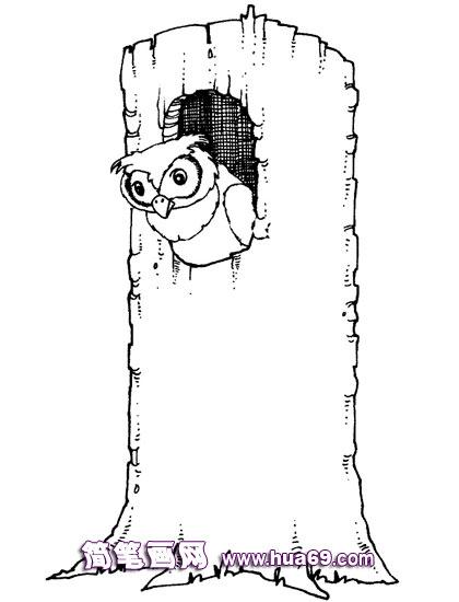幼儿简笔画 猫头鹰的家 高清图片