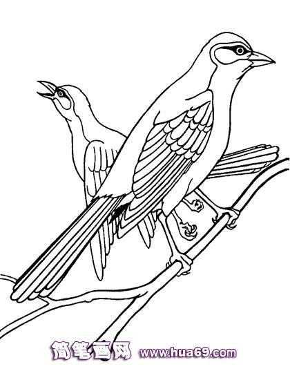 幼儿简笔画:枝头鸟2