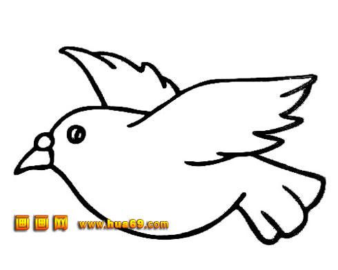 白鸽简笔画,白鸽简笔画图片大全,小白鸽简笔画,白鸽图片简笔高清图片