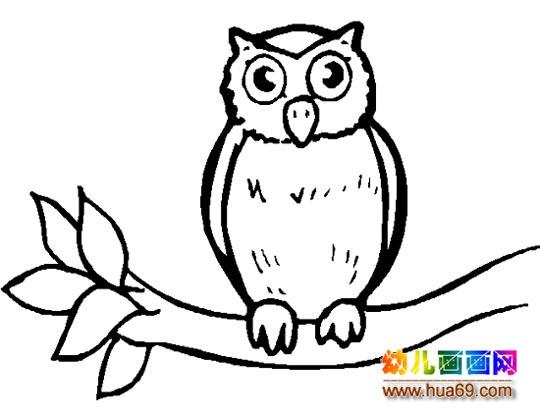 简笔画:一只猫头鹰4