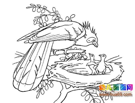 小鸟简笔画绘画图
