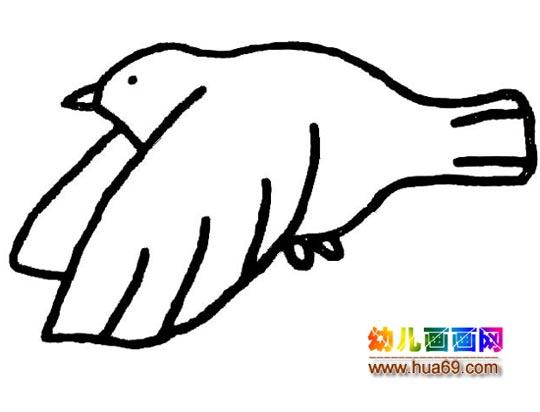 飞翔的和平鸽简笔画3图片