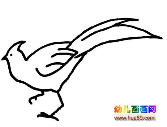 长尾巴的小鸟简笔画