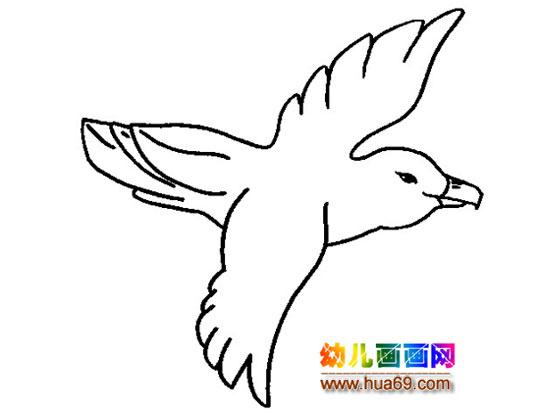 放飞和平鸽图片飞翔的和平鸽图片大全和平鸽图片