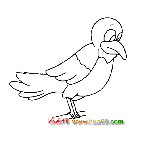 站立的画眉鸟简笔画1,画画网
