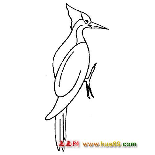 站立的啄木鸟简笔画3,画画网