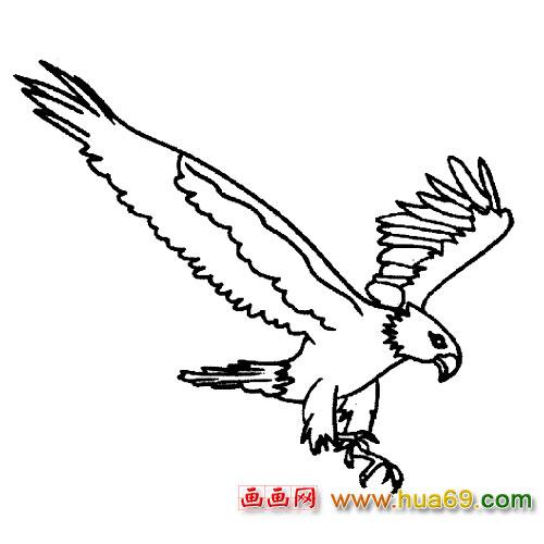 简笔画 翱翔的老鹰6