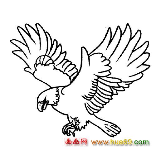 简笔画 翱翔的老鹰7