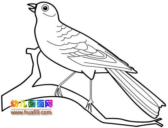 黄鹂鸟简笔画