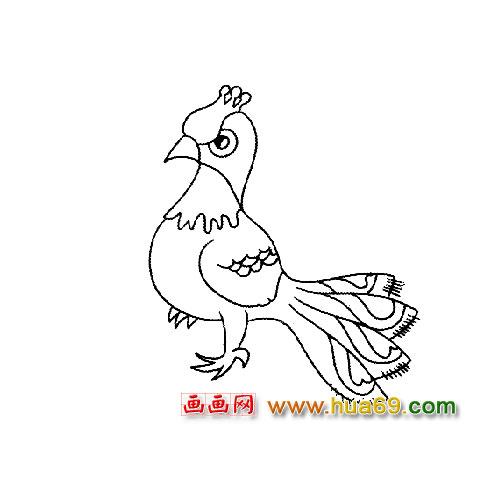 可爱的孔雀宝宝简笔画2