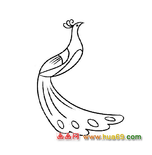 美丽的孔雀│简笔画3