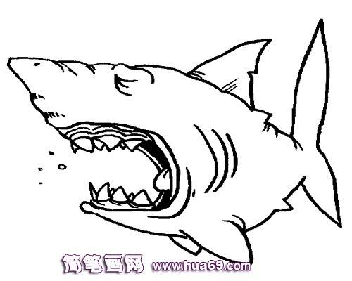 幼儿简笔画:大嘴鲨鱼