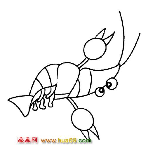 鱼类简笔画 玩耍的小虾,画画网