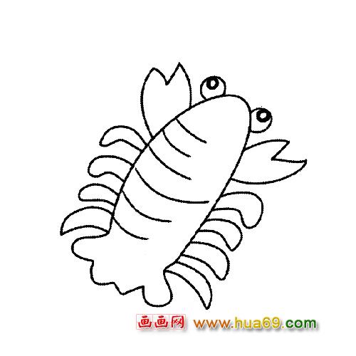鱼类简笔画 一只小胖虾