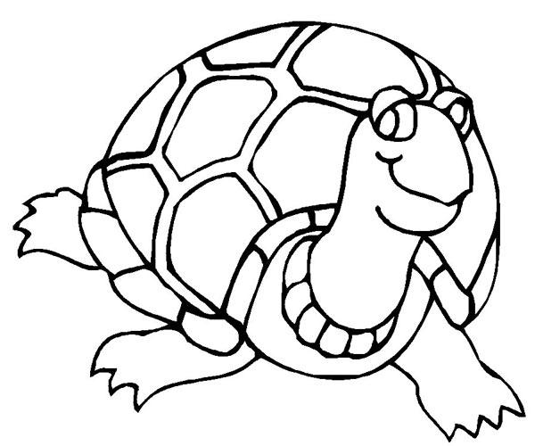 一只很精神的小乌龟 水生动物简笔画