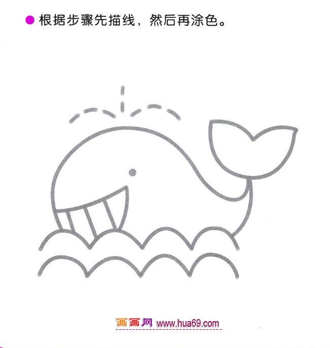 鲸的身体结构示意图