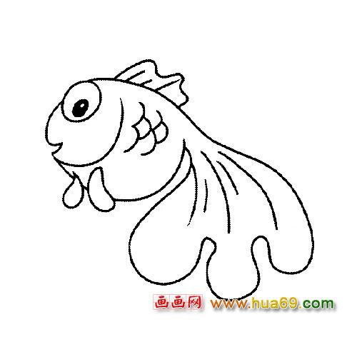 小金鱼简笔画 小金鱼 小金鱼