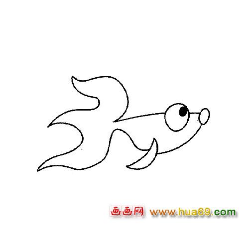 鱼类简笔画:瞪着眼睛的小金鱼