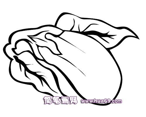 大白菜的简笔画组图 大白菜的简笔画组图画 大白菜简笔画图片