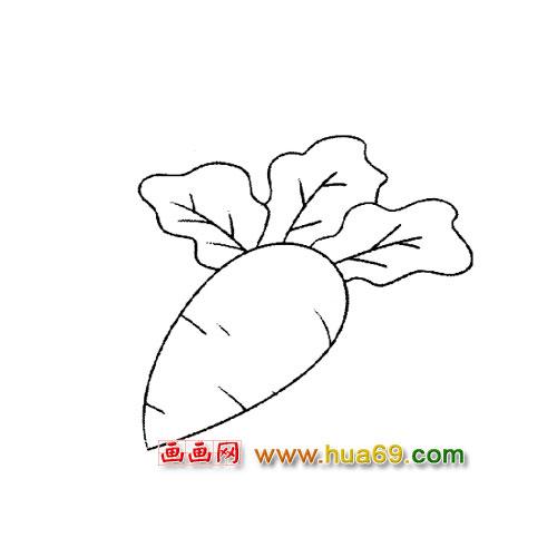 蔬菜简笔画│萝卜3
