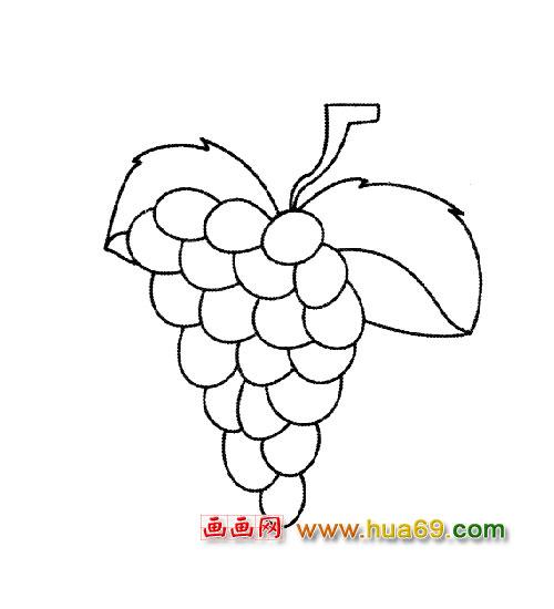 简笔画:香甜的葡萄2